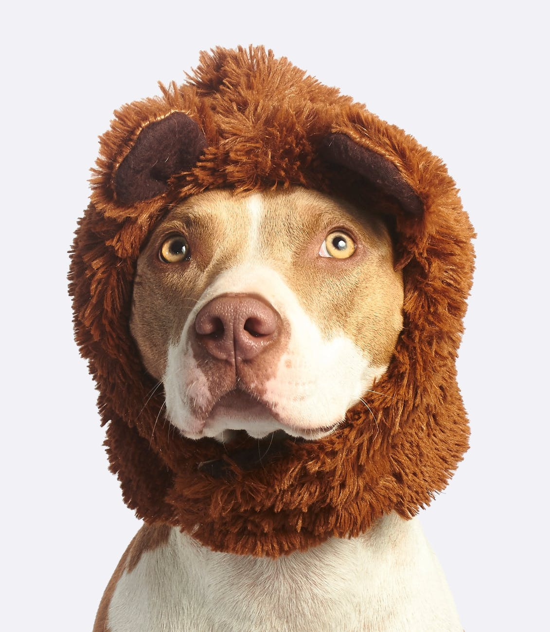 dog with brown faux fur headband
